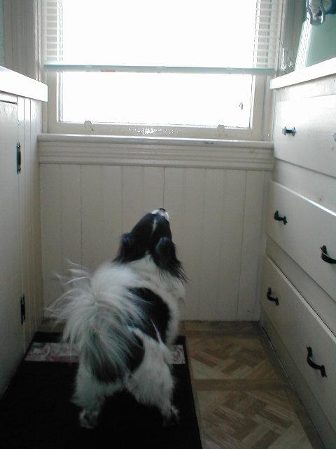 Dovi barking at a fly 5-6-09