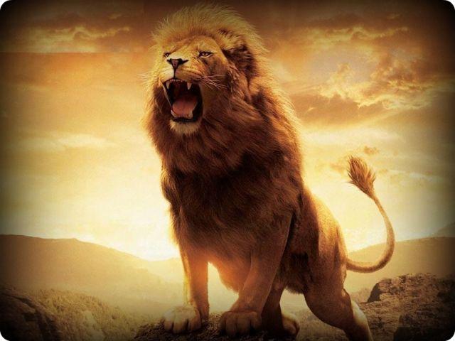 Lion brave
