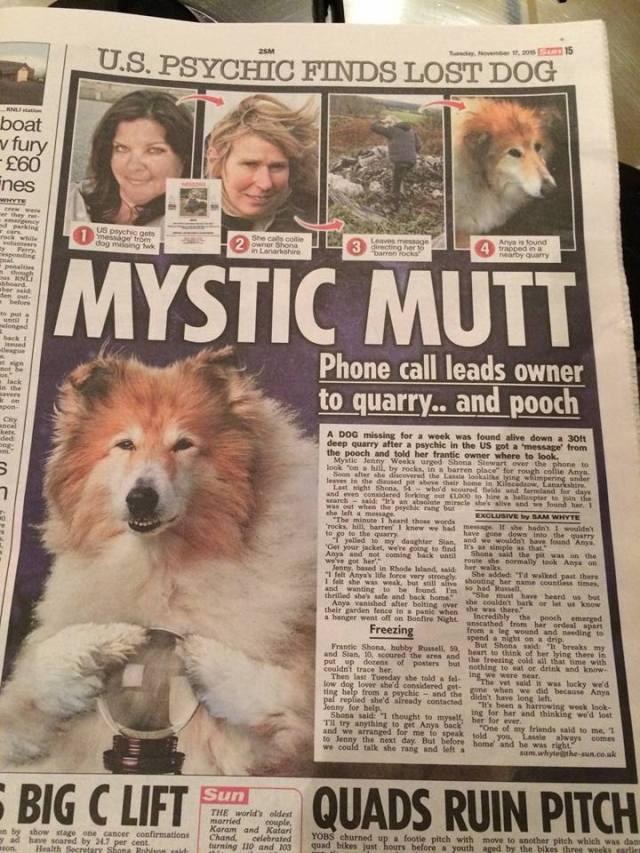 Anya Headline Mystic Mutt